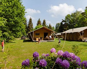 Guest house 230332 • Tent House Friese bossen • Safaritent de Wold Lodge